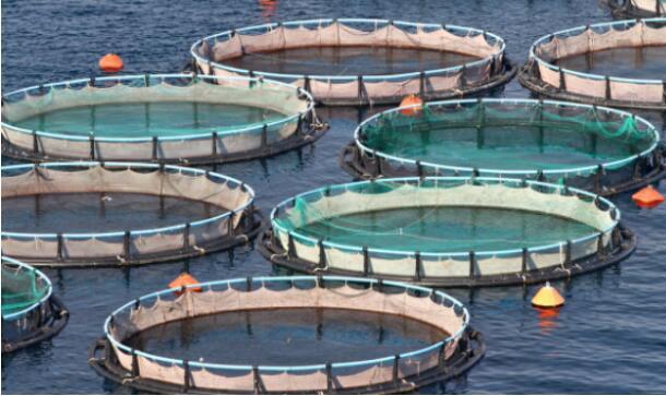 鱼,虾,海参养殖中的应用